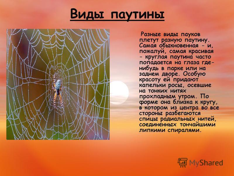 Виды паутины Разные виды пауков плетут разную паутину. Самая обыкновенная - и, пожалуй, самая красивая - круглая паутина часто попадается на глаза где- нибудь в парке или на заднем дворе. Особую красоту ей придают капельки росы, осевшие на тонких нит