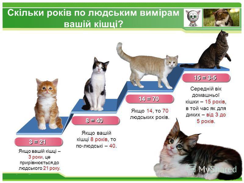 www.themegallery.com Скільки років по людським вимірам вашій кішці? 3 = 21 Якщо вашій кішці – 3 роки, це прирівнюється до людського 21 року. Якщо вашій кішці 8 років, то по-людські – 40. Якщо 14, то 70 людських років. Середній вік домашньої кішки – 1