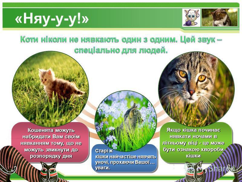 www.themegallery.com Кошенята можуть набридати Вам своїм нявканням тому, що не можуть звикнути до розпорядку дня Старі ж кішки найчастіше нявчать уночі, прохаючи Вашої … уваги. Якщо кішка починає нявкати ночами в літньому віці - це може бути ознакою