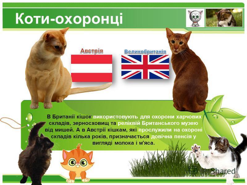 www.themegallery.com Коти-охоронці 90% 15% 96% В Британії кішок використовують для охорони харчових складів, зерносховищ та реліквій Британського музею від мишей. А в Австрії кішкам, які прослужили на охороні складів кілька років, призначається довіч