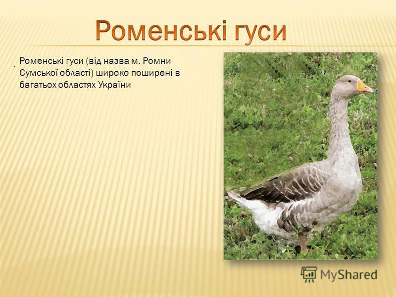 . Роменські гуси (від назва м. Ромни Сумської області) широко поширені в багатьох областях України
