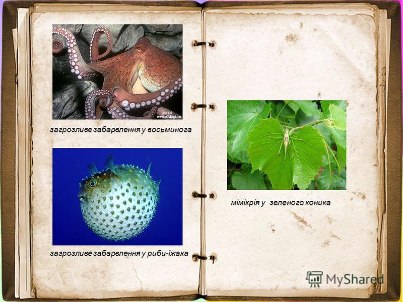 загрозливе забарвлення у восьминога загрозливе забарвлення у риби-їжака мімікрія у зеленого коника