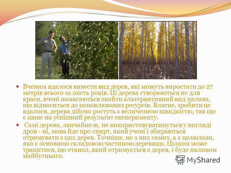 Вченим вдалося вивести вид дерев, які можуть виростати до 27 метрів всього за шість років. Ці дерева створюються не для краси, вчені намагаються знайти альтернативний вид палива, що відноситься до поновлюваних ресурсів. Власне, зробити це вдалося, де