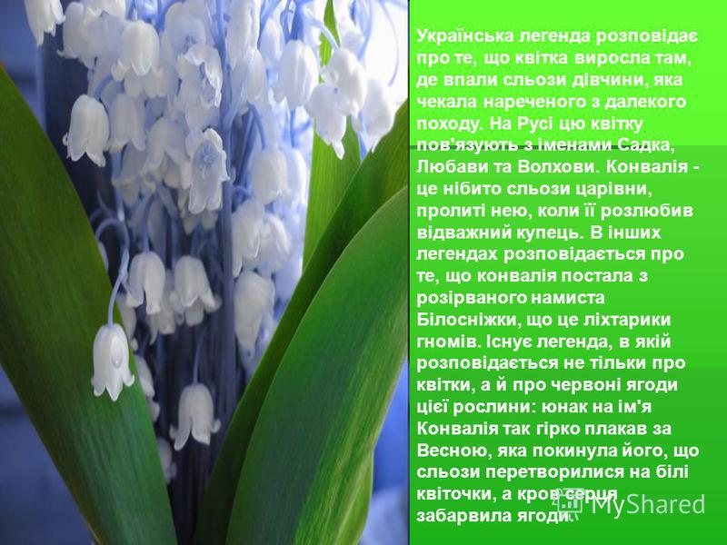 Українська легенда розповідає про те, що квітка виросла там, де впали сльози дівчини, яка чекала нареченого з далекого походу. На Русі цю квітку пов'язують з іменами Садка, Любави та Волхови. Конвалія - це нібито сльози царівни, пролиті нею, коли її
