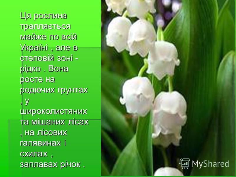 Ця рослина трапляється майже по всій Україні, але в степовій зоні - рідко. Вона росте на родючих грунтах, у широколистяних та мішаних лісах, на лісових галявинах і схилах, заплавах річок.