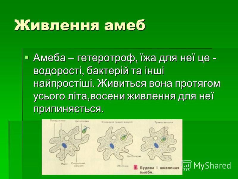 Живлення амеб Амеба – гетеротроф, їжа для неї це - водорості, бактерій та інші найпростіші. Живиться вона протягом усього літа,восени живлення для неї припиняється. Амеба – гетеротроф, їжа для неї це - водорості, бактерій та інші найпростіші. Живитьс