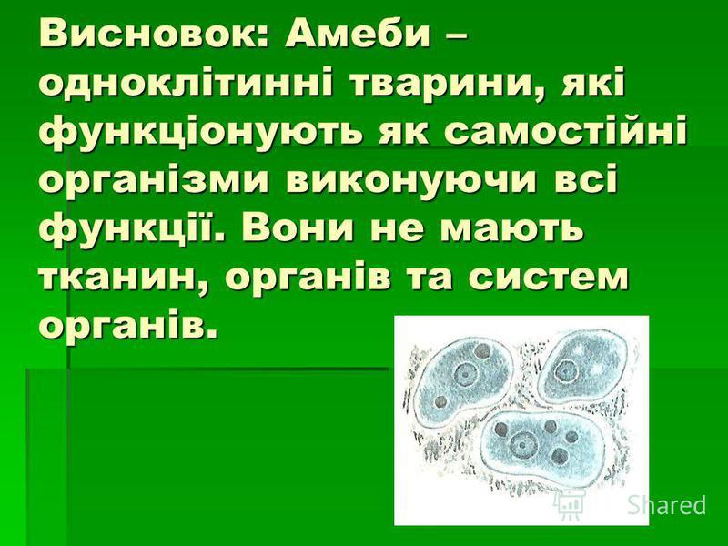 Висновок: Амеби – одноклітинні тварини, які функціонують як самостійні організми виконуючи всі функції. Вони не мають тканин, органів та систем органів.