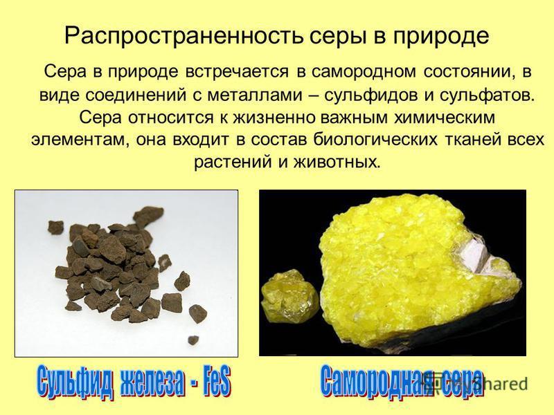 Распространенность серы в природе Сера в природе встречается в самородном состоянии, в виде соединений с металлами – сульфидов и сульфатов. Сера относится к жизненно важным химическим элементам, она входит в состав биологических тканей всех растений