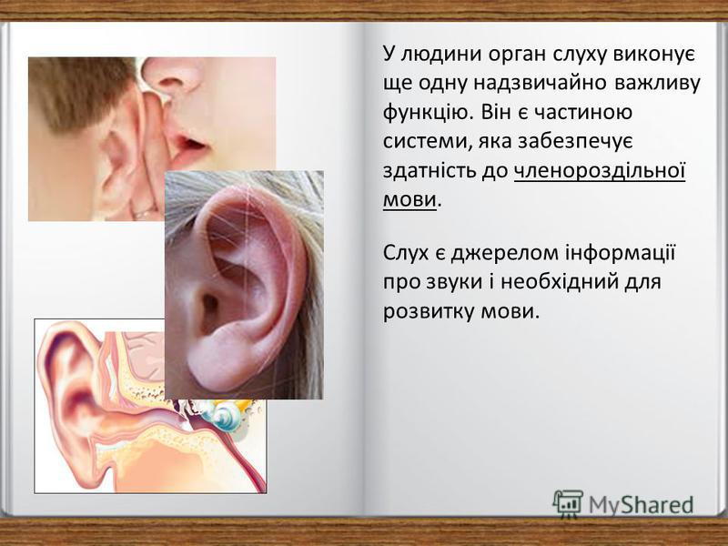У людини орган слуху виконує ще одну надзвичайно важливу функцію. Він є частиною системи, яка забезпечує здатність до членороздільної мови. Слух є джерелом інформації про звуки і необхідний для розвитку мови.