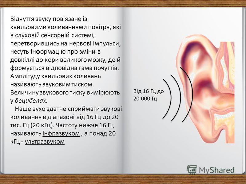 Відчуття звуку пов'язане із хвильовими коливаннями повітря, які в слуховій сенсорній системі, перетворившись на нервові імпульси, несуть інформацію про зміни в довкіллі до кори великого мозку, де й формується відповідна гама почуттів. Амплітуду хвиль