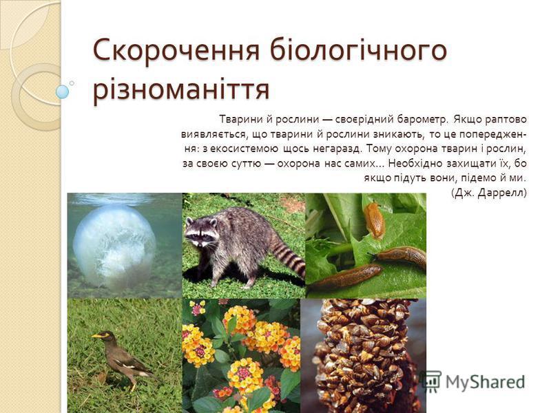 Скорочення біологічного різноманіття Тварини й рослини своєрідний барометр. Якщо раптово виявляється, що тварини й рослини зникають, то це попереджен - ня : з екосистемою щось негаразд. Тому охорона тварин і рослин, за своєю суттю охорона нас самих …