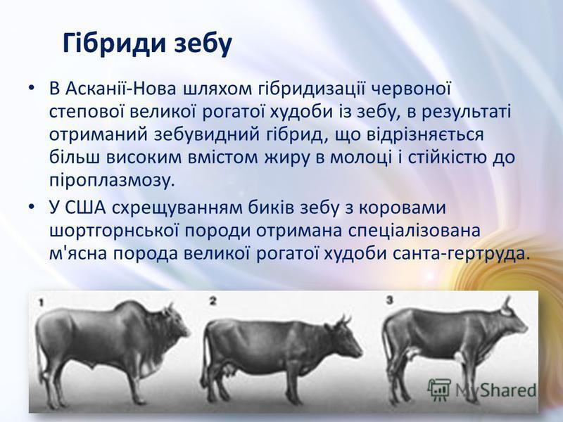 В Асканії-Нова шляхом гібридизації червоної степової великої рогатої худоби із зебу, в результаті отриманий зебувидний гібрид, що відрізняється більш високим вмістом жиру в молоці і стійкістю до піроплазмозу. У США схрещуванням биків зебу з коровами
