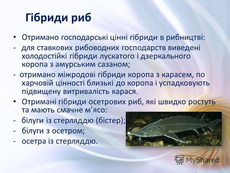 Отримано господарські цінні гібриди в рибництві: - для ставкових рибоводних господарств виведені холодостійкі гібриди лускатого і дзеркального коропа з амурським сазаном; - отримано міжродові гібриди коропа з карасем, по харчовій цінності близькі до