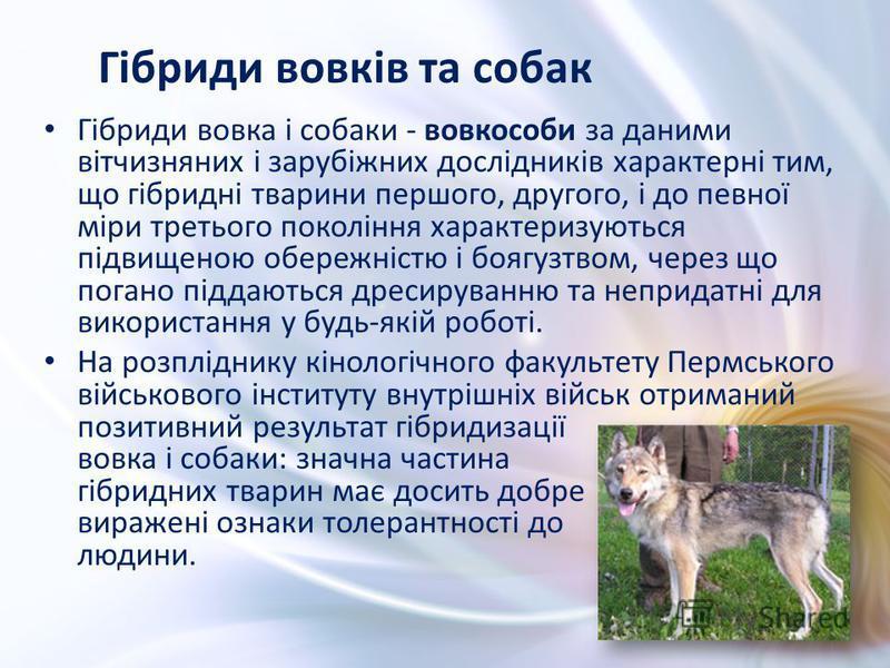 Гібриди вовка і собаки - вовкособи за даними вітчизняних і зарубіжних дослідників характерні тим, що гібридні тварини першого, другого, і до певної міри третього покоління характеризуються підвищеною обережністю і боягузтвом, через що погано піддають