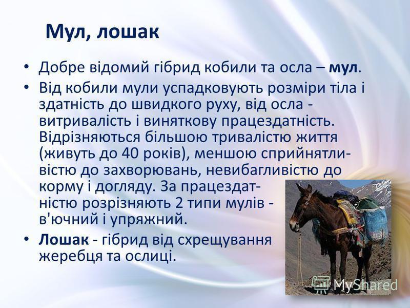 Добре відомий гібрид кобили та осла – мул. Від кобили мули успадковують розміри тіла і здатність до швидкого руху, від осла - витривалість і виняткову працездатність. Відрізняються більшою тривалістю життя (живуть до 40 років), меншою сприйнятли- віс