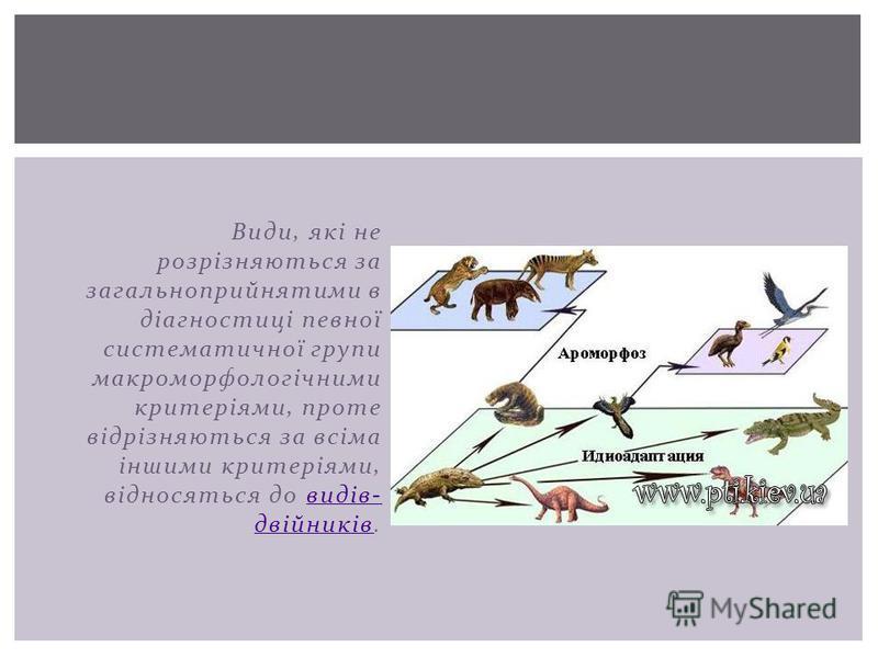 Види, які не розрізняються за загальноприйнятими в діагностиці певної систематичної групи макроморфологічними критеріями, проте відрізняються за всіма іншими критеріями, відносяться до видів- двійників.видів- двійників