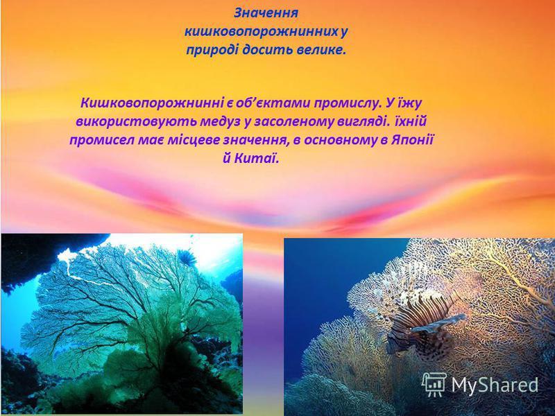 Значення кишковопорожнинних у природі досить велике. Кишковопорожнинні є обєктами промислу. У їжу використовують медуз у засоленому вигляді. їхній промисел має місцеве значення, в основному в Японії й Китаї.