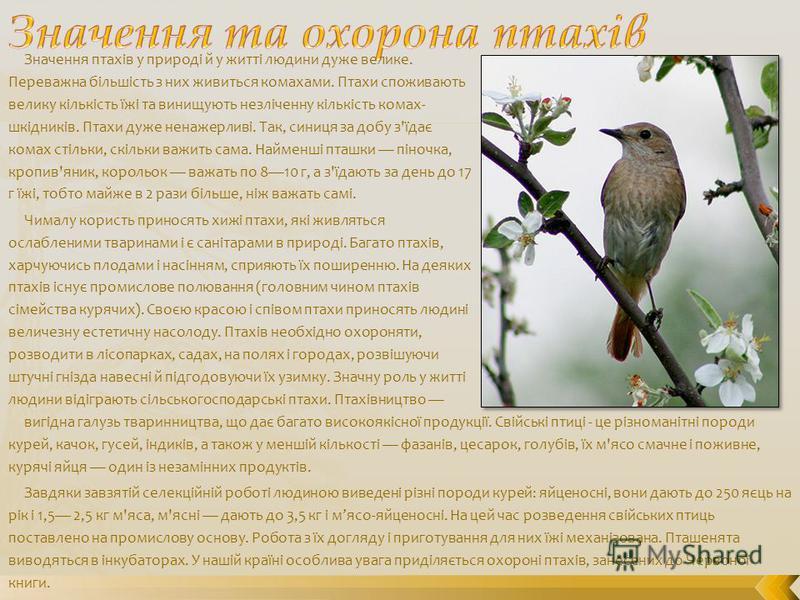 Значення птахів у природі й у житті людини дуже велике. Переважна більшість з них живиться комахами. Птахи споживають велику кількість їжі та винищують незліченну кількість комах- шкідників. Птахи дуже ненажерливі. Так, синиця за добу з'їдає комах ст