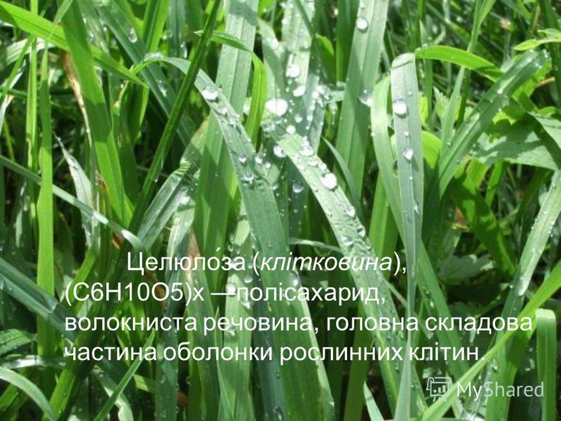 Целюлоза (клітковина), (С6Н10О5)x полісахарид, волокниста речовина, головна складова частина оболонки рослинних клітин.