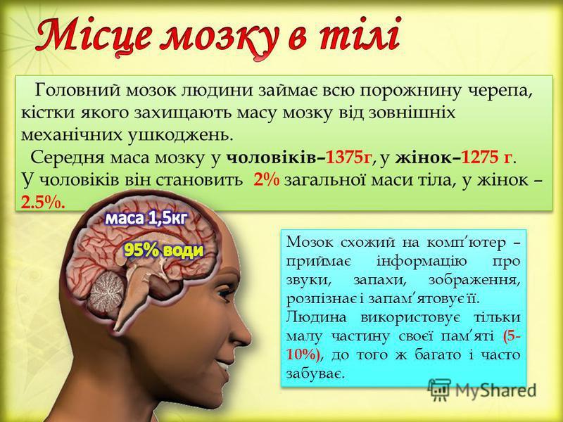 Головний мозок людини займає всю порожнину черепа, кістки якого захищають масу мозку від зовнішніх механічних ушкоджень. Середня маса мозку у чоловіків–1375г, у жінок–1275 г. У чоловіків він становить 2% загальної маси тіла, у жінок – 2.5%. Головний