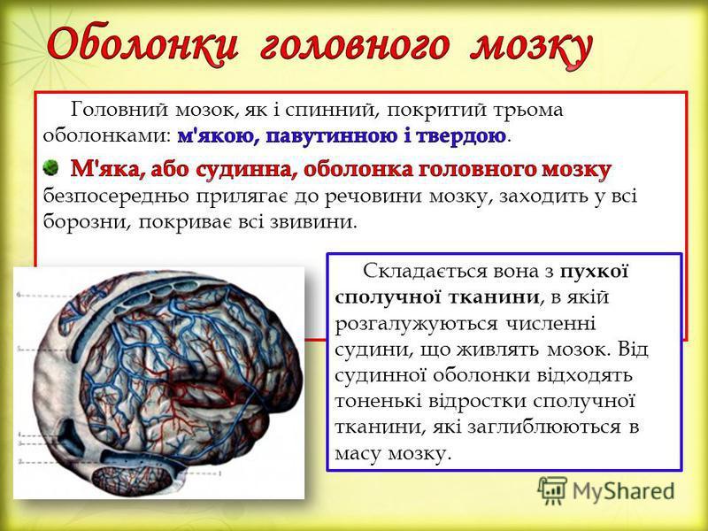 Складається вона з пухкої сполучної тканини, в якій розгалужуються численні судини, що живлять мозок. Від судинної оболонки відходять тоненькі відростки сполучної тканини, які заглиблюються в масу мозку.