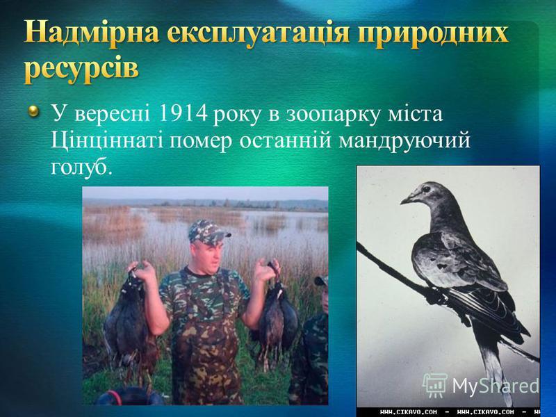 У вересні 1914 року в зоопарку міста Цінціннаті помер останній мандруючий голуб.