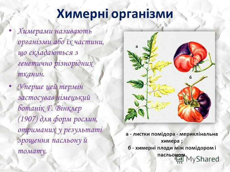 Химерні організми Химерами називають організми або їх частини, що складаються з генетично різнорідних тканин. Уперше цей термін застосував німецький ботанік Г. Вінклер (1907) для форм рослин, отриманих у результаті зрощення пасльону й томату. а - лис