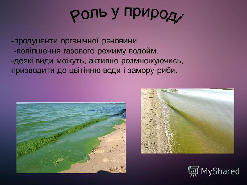 Золотисті водорості зустрічаються в основному в чистих прісних водоймах помірних широт, досягаючи найбільшого видового різноманіття в кислих водах сфагнових боліт, менша кількість видів живе в морях і солоних озерах, одиничні виявлені в грунті. У вод