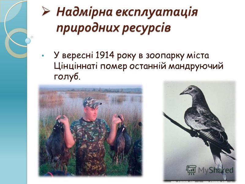 Надмірна експлуатація природних ресурсів Надмірна експлуатація природних ресурсів У вересні 1914 року в зоопарку міста Цінціннаті помер останній мандруючий голуб.