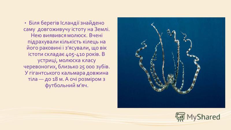 Біля берегів Ісландії знайдено саму довгоживучу істоту на Землі. Нею виявився молюск. Вчені підрахували кількість кілець на його раковині і зясували, що вік істоти складає 405-410 років. В устриці, молюска класу черевоногих, близько 25 000 зyбів. У г