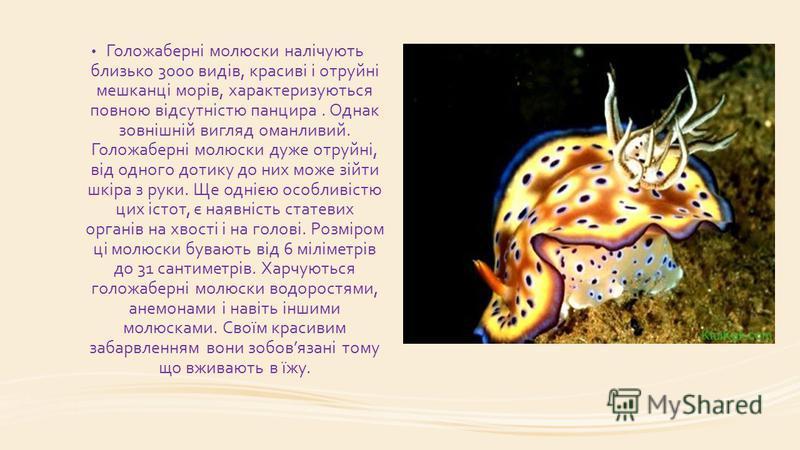 Голожаберні молюски налічують близько 3000 видів, красиві і отруйні мешканці морів, характеризуються повною відсутністю панцира. Однак зовнішній вигляд оманливий. Голожаберні молюски дуже отруйні, від одного дотику до них може зійти шкіра з руки. Ще