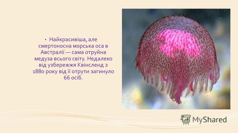 Найкрасивіша, але смертоносна морська оса в Австралії сама отруйна медуза всього світу. Недалеко від узбережжя Квінсленд з 1880 року від її отрути загинуло 66 осіб.