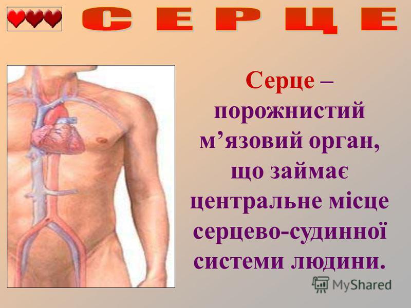 Серце – порожнистий мязовий орган, що займає центральне місце серцево-судинної системи людини.