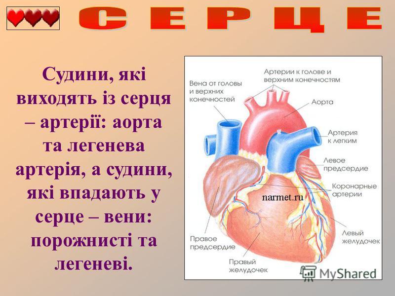 Судини, які виходять із серця – артерії: аорта та легенева артерія, а судини, які впадають у серце – вени: порожнисті та легеневі.