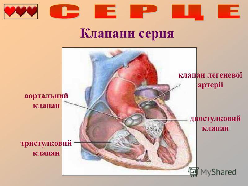 Клапани серця двостулковий клапан тристулковий клапан аортальний клапан клапан легеневої артерії