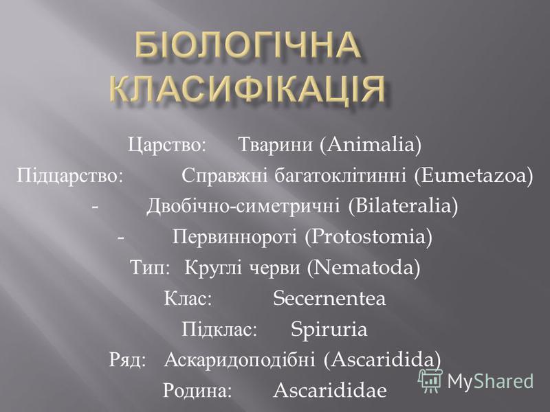 Царство : Тварини (Animalia) Підцарство : Справжні багатоклітинні (Eumetazoa) - Двобічно - симетричні (Bilateralia) - Первиннороті (Protostomia) Тип : Круглі черви (Nematoda) Клас : Secernentea Підклас : Spiruria Ряд : Аскаридоподібні (Ascaridida) Ро