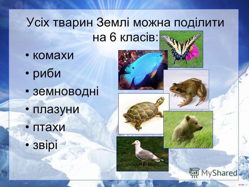 Усіх тварин Землі можна поділити на 6 класів: комахи риби земноводні плазуни птахи звірі