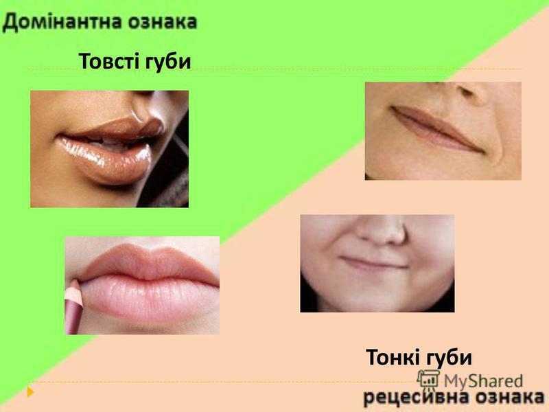 Товсті губи Тонкі губи