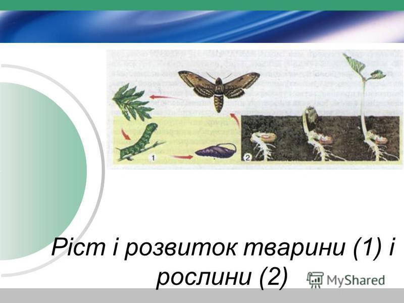 Ріст і розвиток тварини (1) і рослини (2)