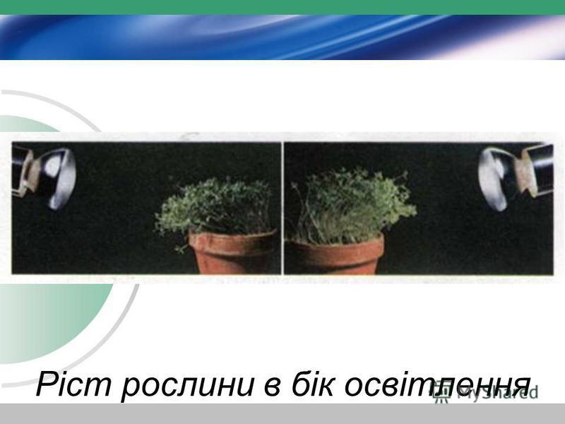 Ріст рослини в бік освітлення