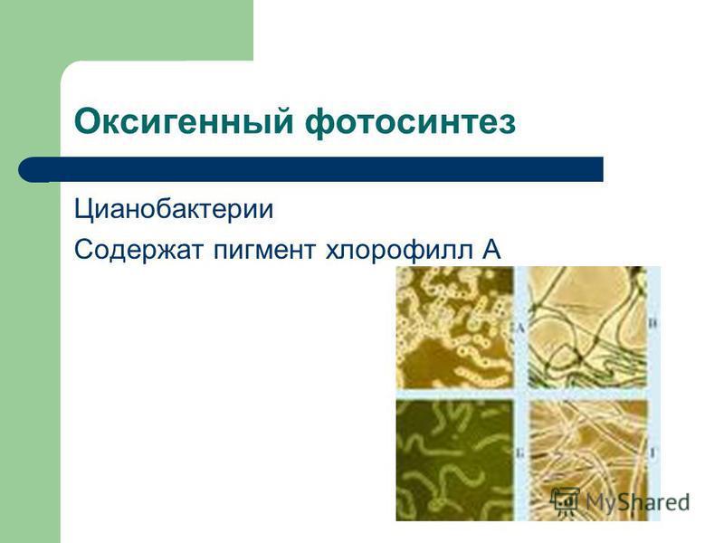 Оксигенный фотосинтез Цианобактерии Содержат пигмент хлорофилл А