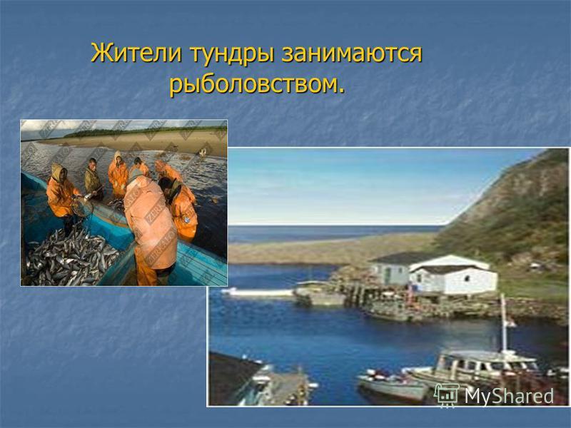Жители тундры занимаются рыболовством.
