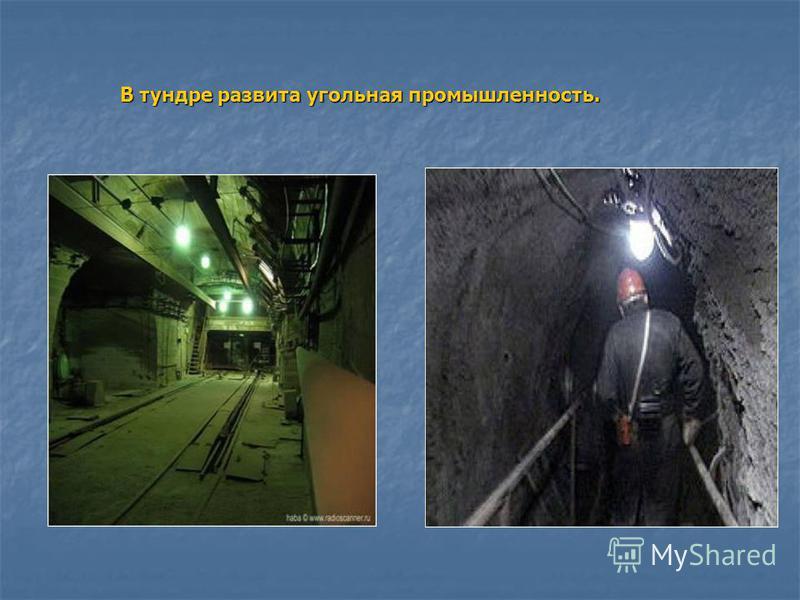В тундре развита угольная промышленность.