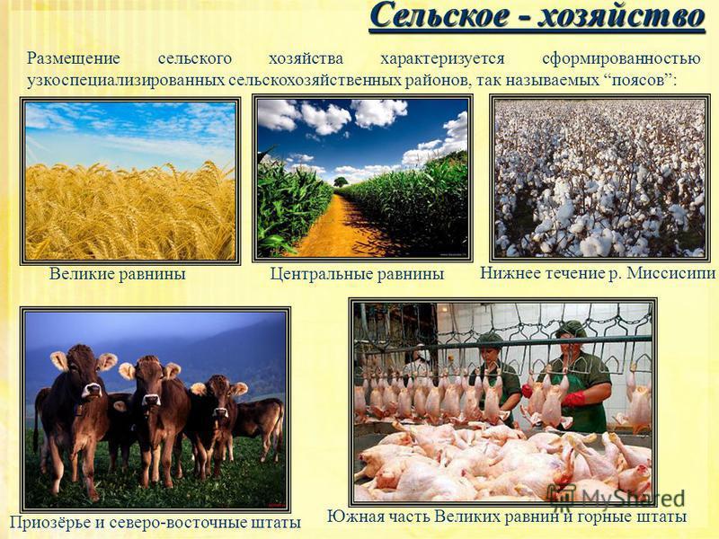 Сельское - хозяйство Сельское - хозяйство Размещение сельского хозяйства характеризуется сформированностью узкоспециализированных сельскохозяйственных районов, так называемых поясов: Великие равнины Центральные равнины Нижнее течение р. Миссисипи При