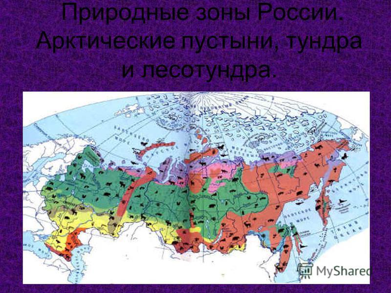 Природные зоны России. Арктические пустыни, тундра и лесотундра. 10.06.2005
