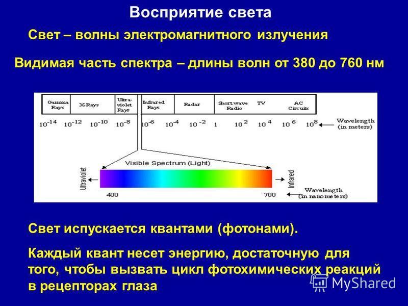 Восприятие света Свет – волны электромагнитного излучения Видимая часть спектра – длины волн от 380 до 760 нм Свет испускается квантами (фотонами). Каждый квант несет энергию, достаточную для того, чтобы вызвать цикл фотохимических реакций в рецептор