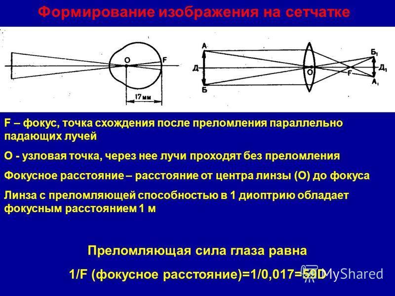 Формирование изображения на сетчатке F – фокус, точка схождения после преломления параллельно падающих лучей О - узловая точка, через нее лучи проходят без преломления Фокусное расстояние – расстояние от центра линзы (О) до фокуса Линза с преломляюще