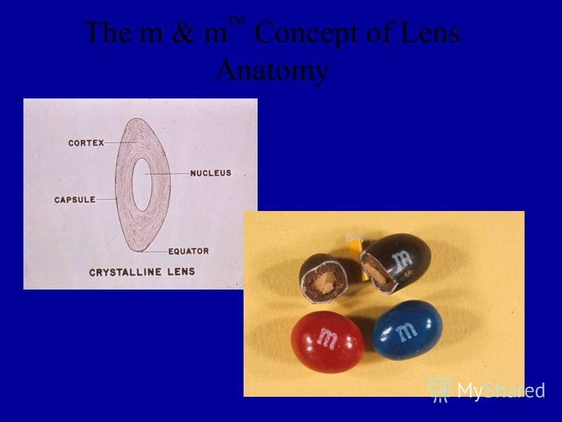 The m & m Concept of Lens Anatomy