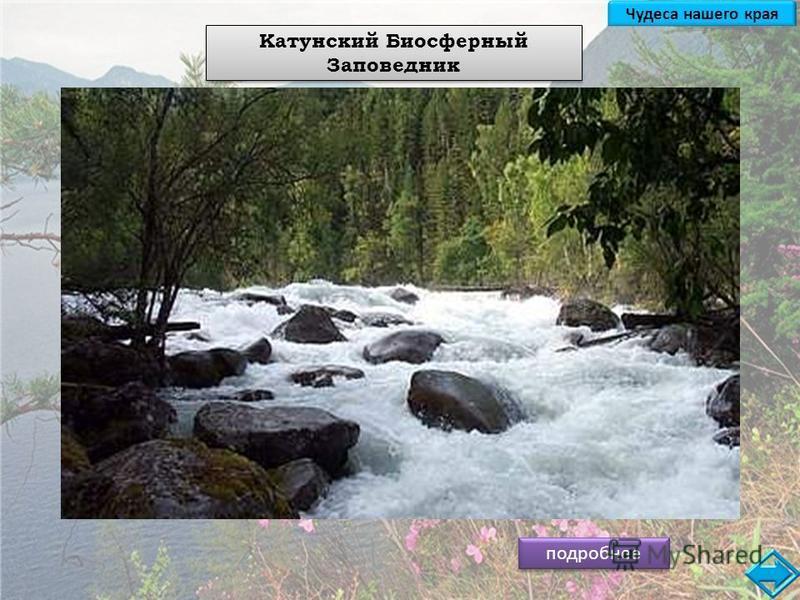 подробнее Катунский Биосферный Заповедник Чудеса нашего края Катунский заповедник расположен в Республике Алтай на правобережье реки Катунь, на южных склонах Катунского хребта. Основан в 1991 году. Площадь 151637 га. Он расположен в самой высокогорно