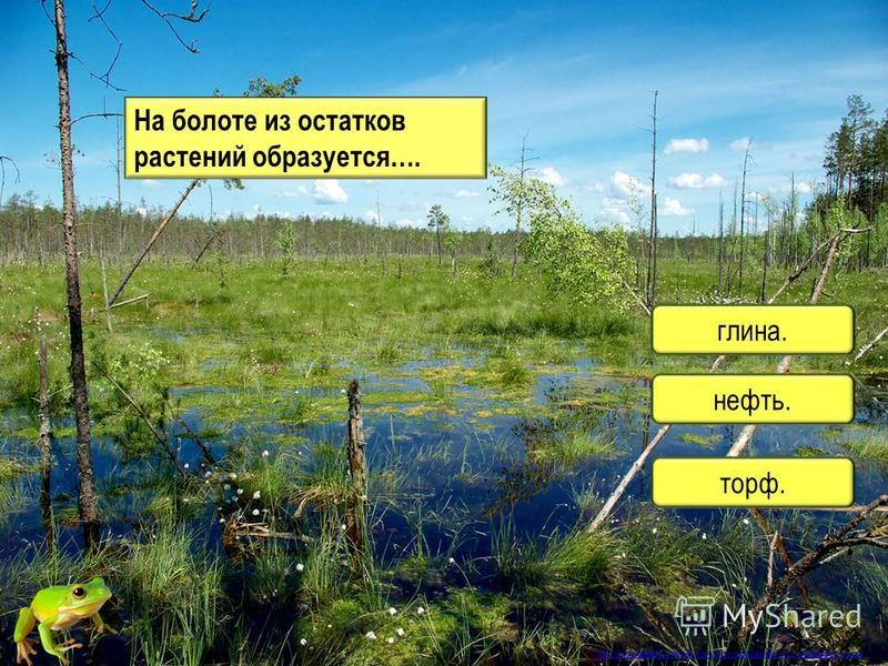 торф. нефть. глина. На болоте из остатков растений образуется…. http://www.klass39.ru/internet-urok-po-okruzhayushhemu-miru-ekosistema-bolota/